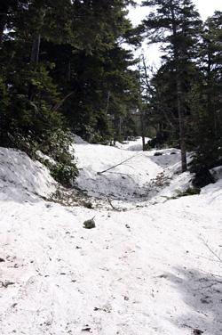 夏道は雪の下