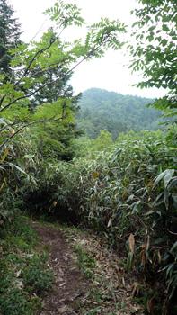 登山道に出る 向かいの山は金山沢の頭