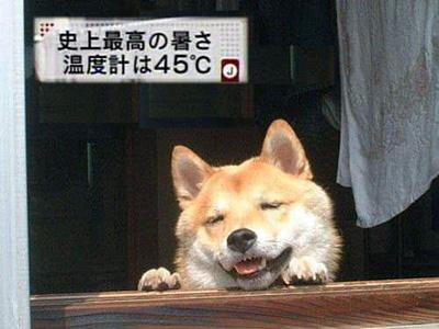あちぃ~m080827-2.jpg