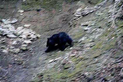 群馬県の某岩場で会った熊