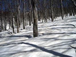 樹林帯の中をペタペタと進む