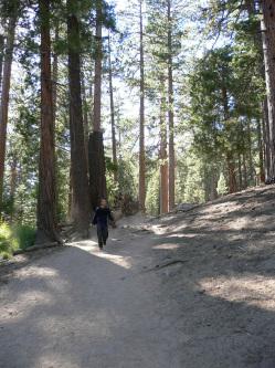 乾燥した誇りっぽい森の中の道