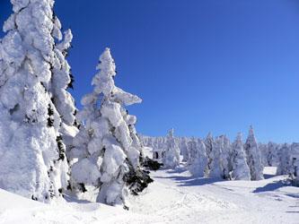 樹氷のモンスター郡