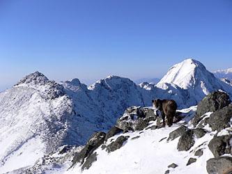 横岳稜線にいたカモシカ